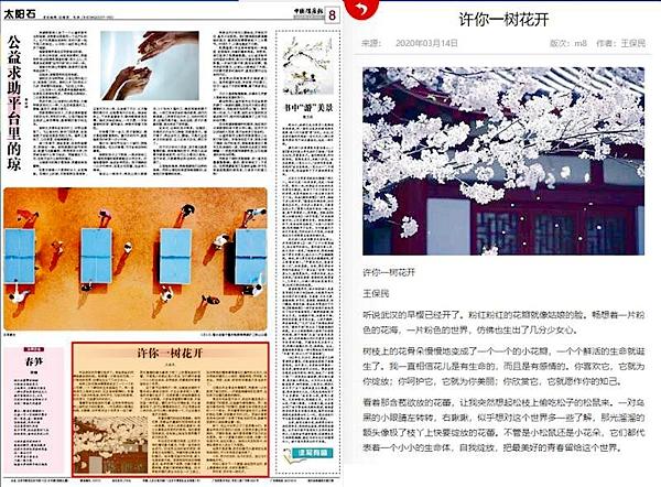 中国煤炭报:许你一树花开